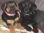 Fraya und Teddy sind Glückspilze