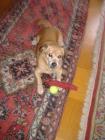 Benny ( Glenn) + 18.02.2014