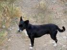 FIDEL (Patenhund 25%)